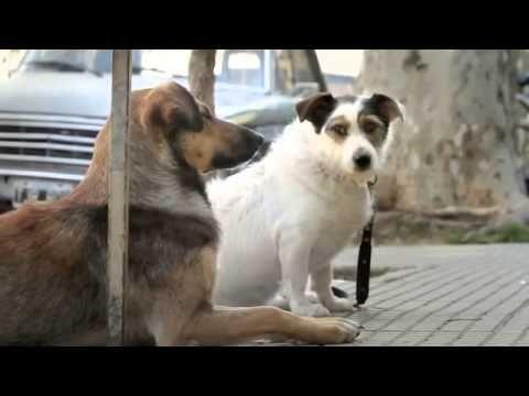 ADOPTA un perro de la calle