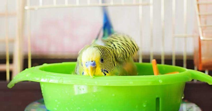 Bei hohen Temperaturen freuen sich Vögel über erfrischendes Nass. Bild: WZF GmbH