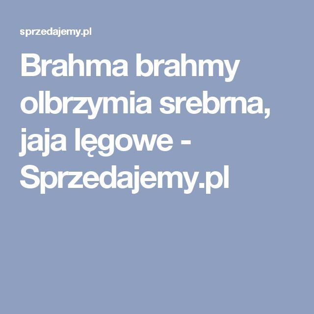 Brahma brahmy olbrzymia srebrna, jaja lęgowe - Sprzedajemy.pl