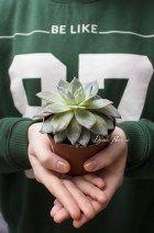 Уход за суккулентами. А так же продажа суккулент эхеверия - http://de-flowers.ru/kazan/succulents-kazan/