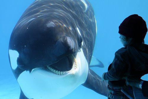 Smiles!Hello, Animal Lovers, Sea Life, Aquatic Animal, Animal Friends, Lil Animal, Animal Nuggets, Whales Talk, Whales Peter