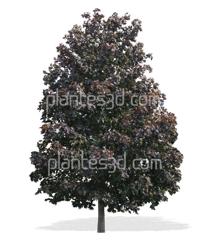 Super 57 best cutout trees plants -plantes détourées images on Pinterest  IN21