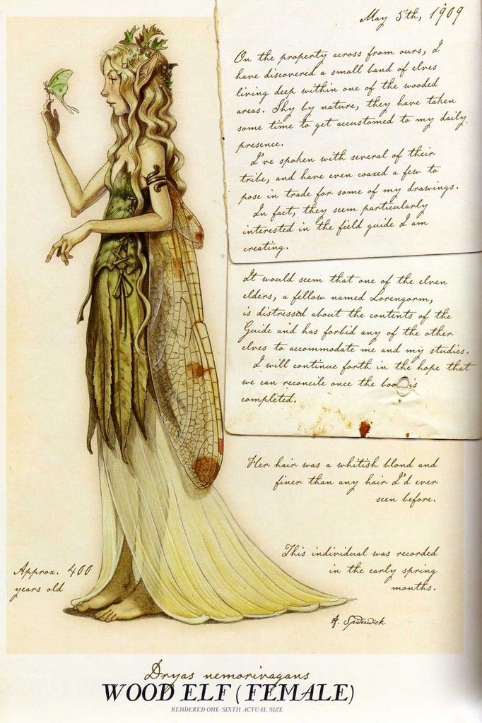 A Wood Elf (female) illustrated in the Faery Fieldguide from the Spiderwick Chronicles.