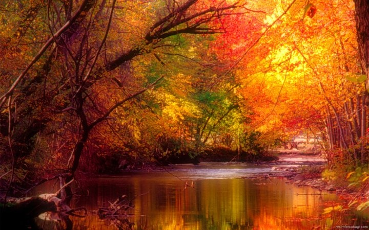 fall leaves on the river