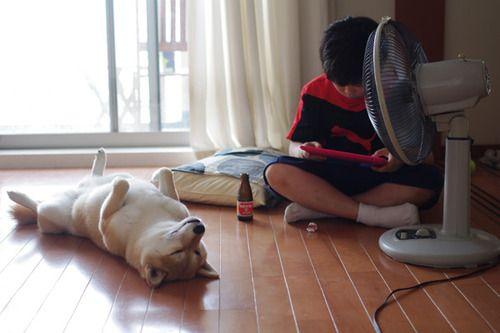 """minimumsho: 犬と少年 気儘 """