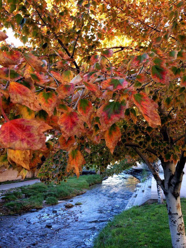 Fall colors along cherry creek bike path in downtown