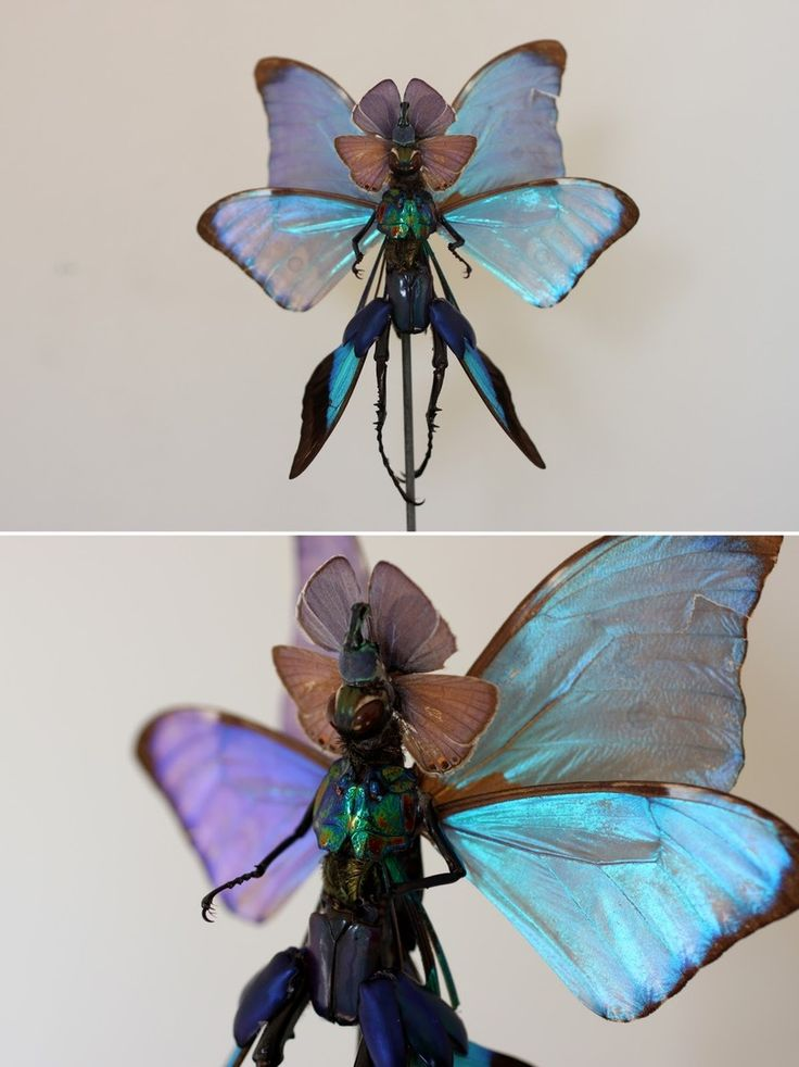 феи,красивые картинки,бабочки,Cedric Laquieze,поделки,чучело,живность,насекомые,расчлененка,жуки