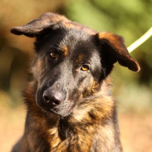 1000 id es sur le th me chiens de taille moyenne sur pinterest chiens de taille moyenne races. Black Bedroom Furniture Sets. Home Design Ideas