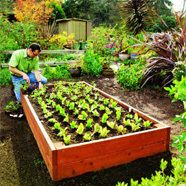 raised vegetable bed - what to plant in winter in south africa