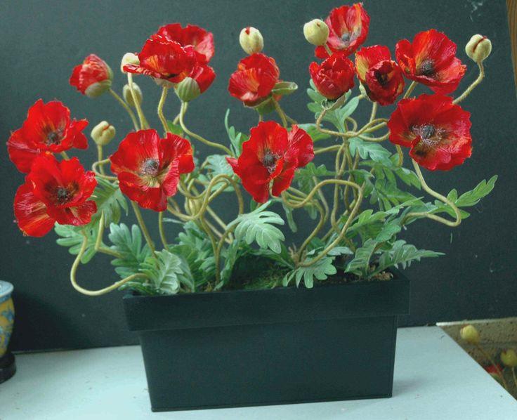 1000 Images About Poppy Arrangement Ideas On Pinterest