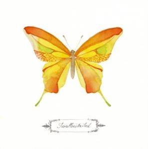LittleChoux.com - Yellow Swallowtail Watercolor