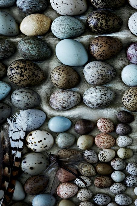 Colors of these beautiful eggs would be a perfect color pallet for any home......LOVE