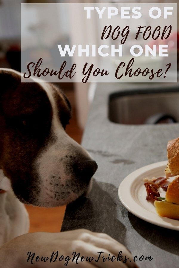 Types Of Dog Food Which One Should You Choose Dog Food Recipes