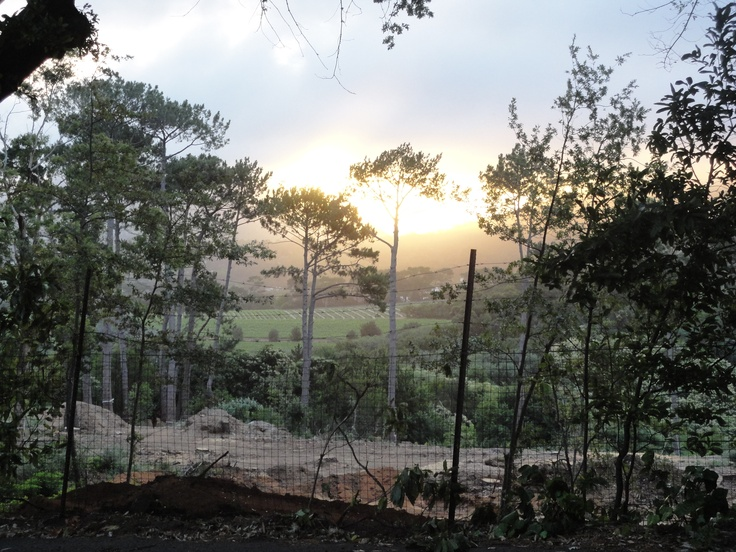 Sunset in Vineyards