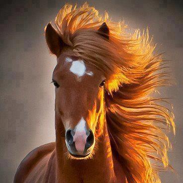 FIREHAIRPhotos, Beautiful Horses, Beautiful Animals, Icelandic Horse, So Pretty, Ridiculous Photogenic, Pretty Horses, Iceland Horses, Wild Horses