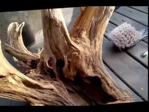 Cleaning a Large Driftwood Root Stump for Aquarium Terrarium Garden Landscape - YouTube