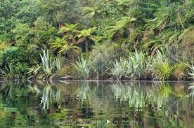 Image result for native bush