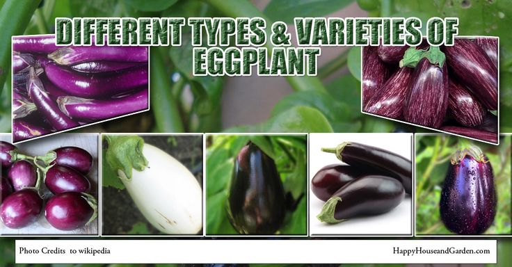 Different Types & varieties Of Eggplant