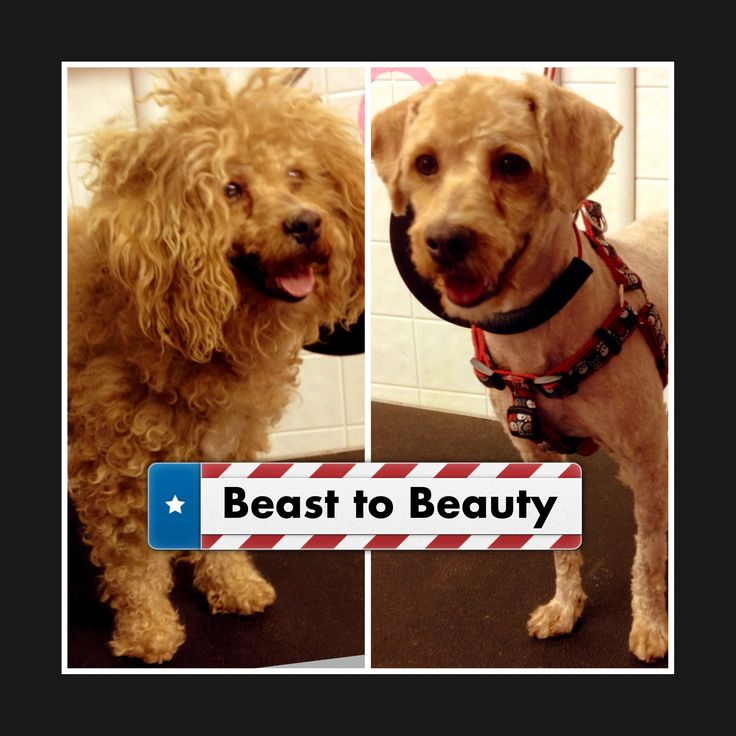 8 best before and after dog grooming photos images on pinterest httpbowwowbeautyshoppe dog grooming pet grooming cat grooming before and after dog grooming photos cute dog photos dog grooming photos solutioingenieria