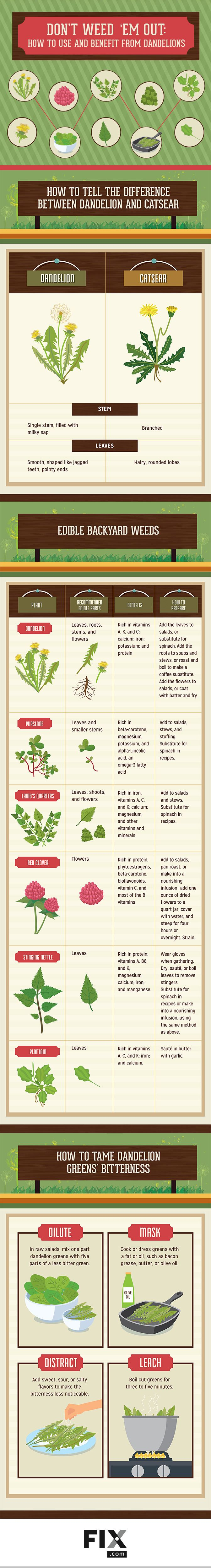 "I've made quite a few dandelion recipes. This versatile ""weed"" is delicious and nutritious from root to flower! Check out this awesome dandelion infographic, too."