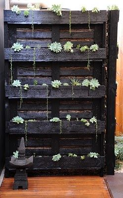 pallet garden - perhaps wall-mounted outside with ferns or alpines? Perhas alpine strawberries....