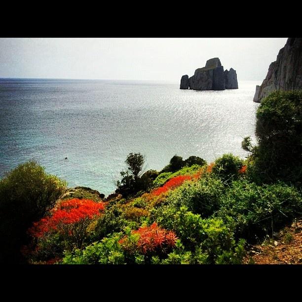 Pan di Zucchero e i fantastici colori della macchia mediterranea a primavera - @alessandrapolo- #webstagram
