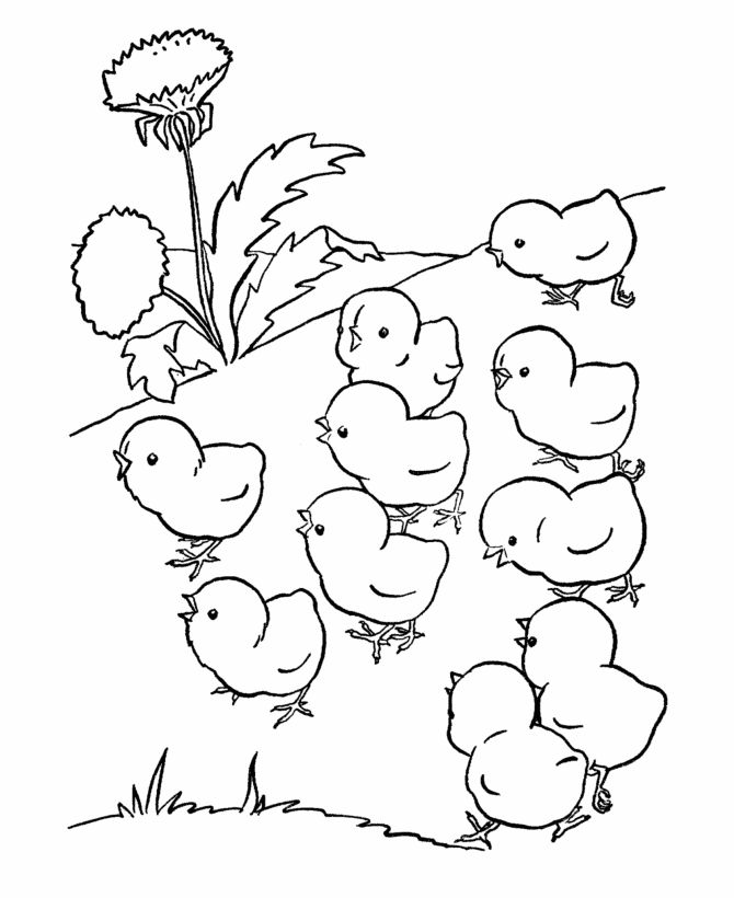 farm animal chicken coloring page baby chicks out for a walk - Baby Chick Coloring Pages Print