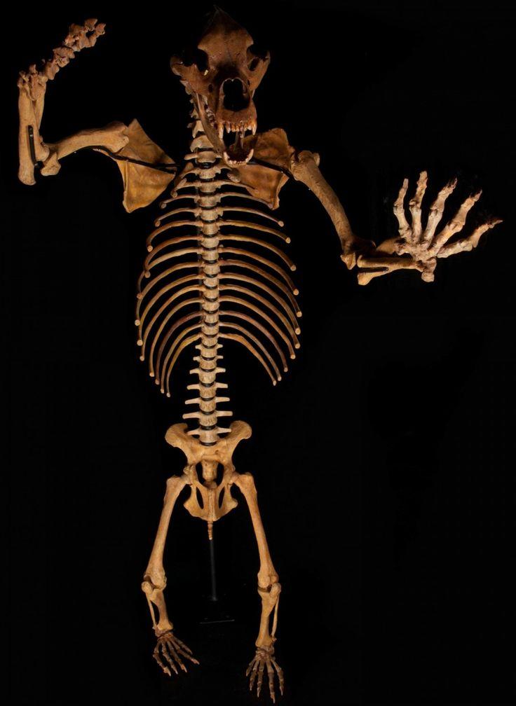 скелет медведя фото можете знать, как