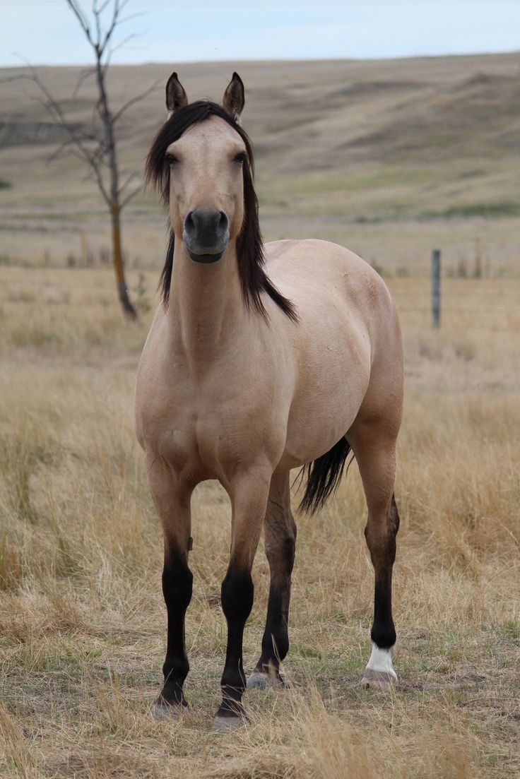 Marana Farms - Mares - Aimee Farrah.    /Wow, what a beauty, so proud looking EL./
