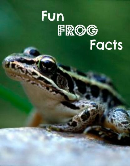 Frogs are amphibians you really should get to know! Here are some fun frog facts for spring. Photo by James Craig