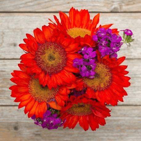 Cherry Bombs | Your eyes aren't tricking you - red sunflowers for Valentine's Day!  | flowers