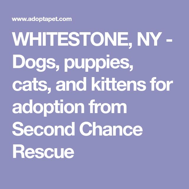 WHITESTONE, NY  - Dogs, puppies, cats, and kittens for adoption from Second Chance Rescue