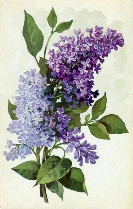 Lilacs or wisteria - gorgeous shades of purple