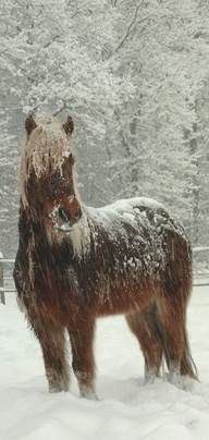 .;  Reminds me of Chrtsmas with my horses in Montana!