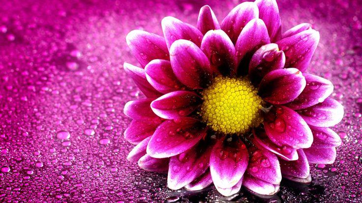 Pink Flower Wallpaper HD - Best Wallpaper HD