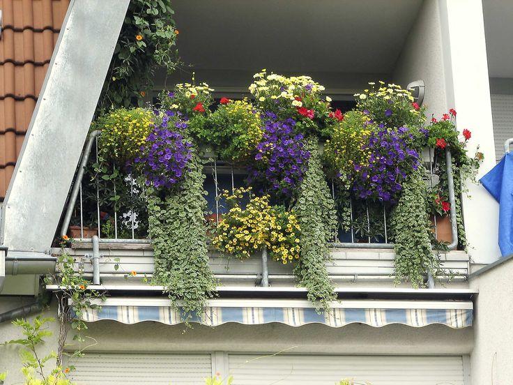 плющ на балконе: 20 тыс изображений найдено в Яндекс.Картинках