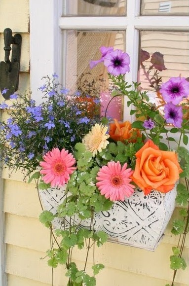 Best 25 Small potted plants ideas only on Pinterest Plants