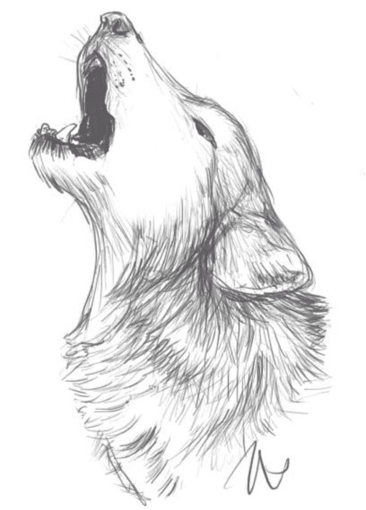 Wolf drawing idea