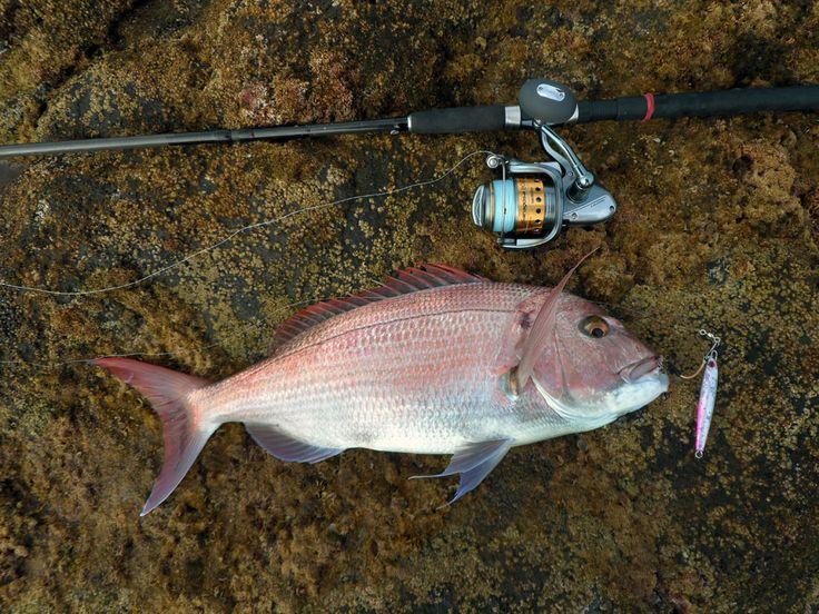 9 Best Jigging Fishing Images On Pinterest Fishing
