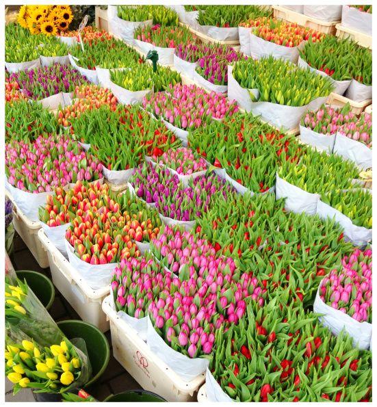 amsterdam, holland flower market, tulips