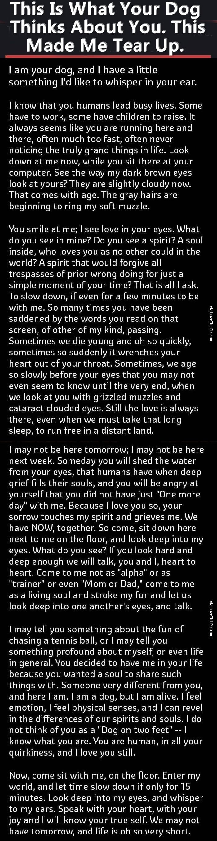 This Is What Your Dog Thinks About You. This Made Me Tear Up. dogs dog story pets interesting facts stories heart warming