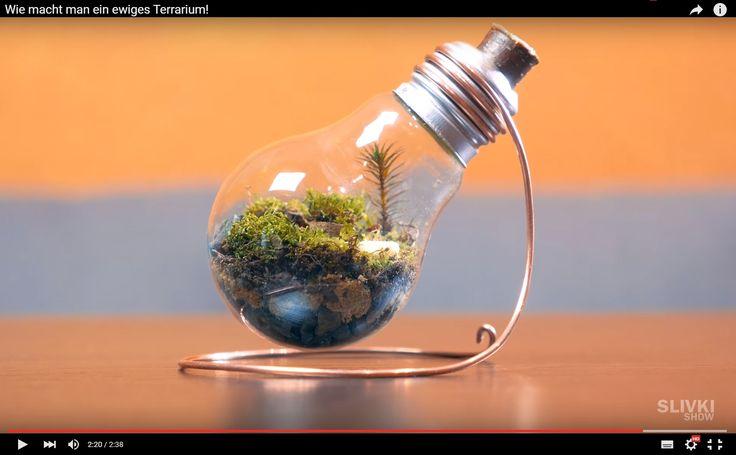Ob als Dekoration, Geschenk oder einfach nur zu Beobachtungszwecken – in nur wenigen Schritten könnt ihr dieses kleine Ökosystem aufbauen. Aber wie kann man ein ewiges Terrarium selbst basteln?