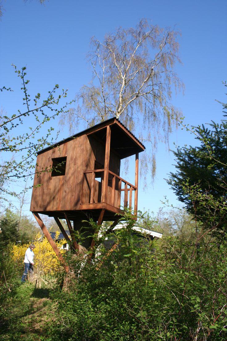 The magic tree house 5