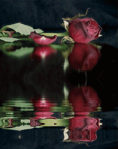 ღ¸.•*¨✿ En la soledad de mi alma ღ¸.•*¨✿: Reflexión