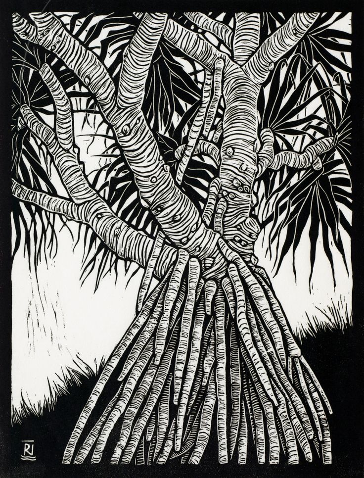 Pandanus 29.5 x 22.5 cm    Edition of 50 Linocut on handmade Japanese paper $350
