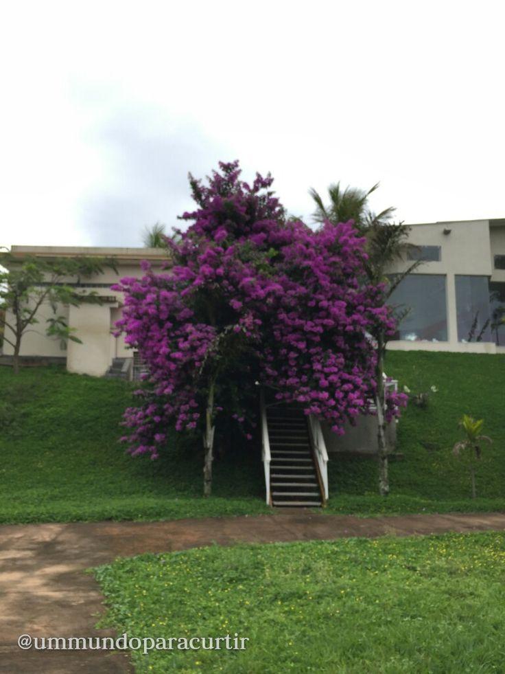 Hotel Mil Flores - Ótima opção de hospedagem em Bragança Paulista. Viagem com famílias, crianças, amigos e pensão completa