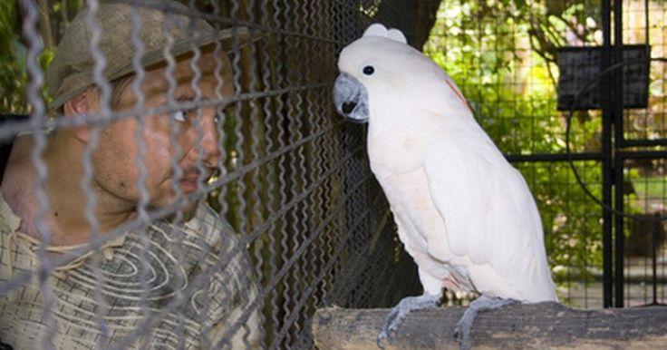 Cómo hacer un aviario para pájaros con tubos de PVC. Los aviarios son un tipo de jaula que puede usarse para contener muchas variedades de pájaros al aire libre. Son lo suficientemente grandes como para caminar dentro y pueden tener columpios y repisas para que las aves se posen en ellos. Para construir este tipo de estructura, en primer lugar necesitarás determinar dónde se ubicará y qué tamaño ...