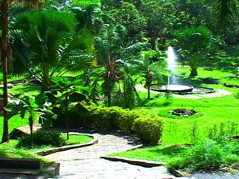 824 best images about my heritage puerto rico on for Jardin botanico el ejido