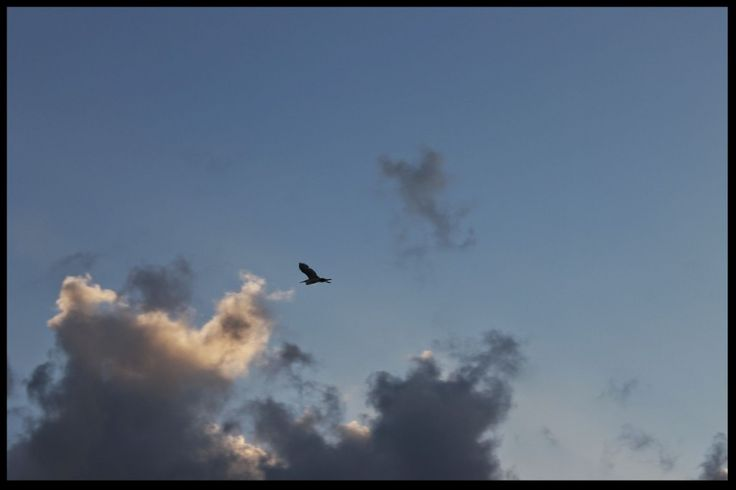 Clouds with Bird Wallpaper