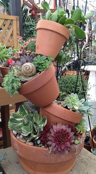 Succulent Tipsy Pots - Gardening For You